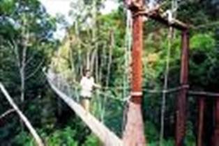 FRIM Rainforest Malaysia Jungle Canopy Walkway and Batu Caves Selayang Hot Spring Selangor Pewter Tour (Malaysia Tour Packages) : canopy walkway malaysia - memphite.com